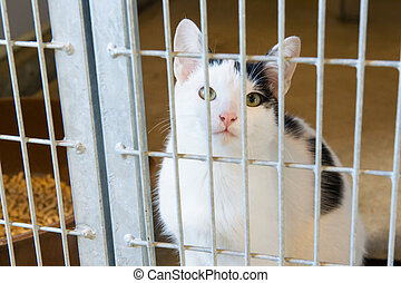 Cat in animal shelter - black and white cat in animal ...