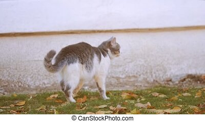 cat in Autumn Leaves. Cute cat sniffing on yellow autumn fallen leaves. cat walking on lifestyle outdoor the street concept