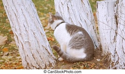 cat in Autumn Leaves. Cute cat sniffing on yellow autumn fallen leaves. cat walking on outdoor lifestyle the street concept