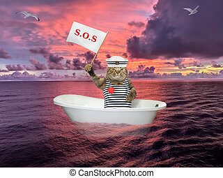 Cat in bathtub on sea after shipwreck