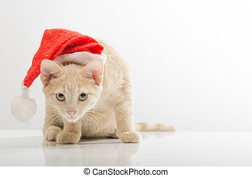 Cat in bell of Santa Claus