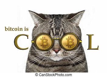 Cat in bitcoin glasses 2