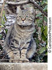 Cat in Bushes