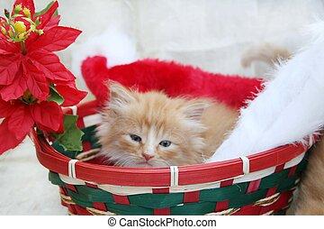 Cat in Christmas basket
