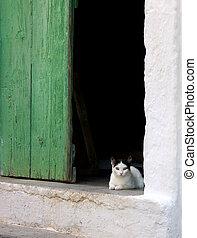 Cat in doorway 2