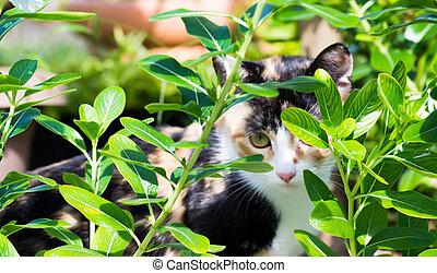 Cat in Flower Field