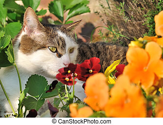 Tabby and white cat lying in flowers