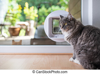 cat in front of cat flap in window