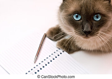 Cat in front of notebook