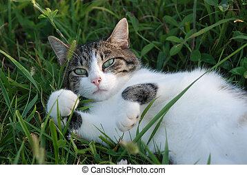 cat in grass II