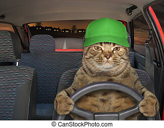 Cat in hat driving red car 2