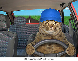 Cat in hat driving red car