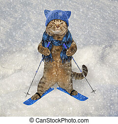 Cat in knitted hat on skis 2