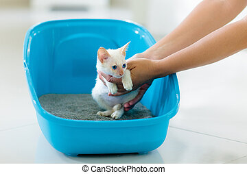 Cat in litter box. Kitten in toilet. Home pet care