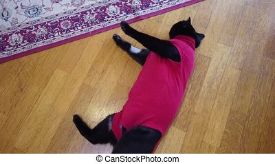 cat in red medical suit after a veterinarian mastectomy surgery. Pet care and medication.