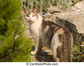 Cat in Natural Environment Looking Back - Mixed-bred Cat in...