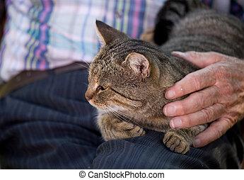 Cat in old man lap