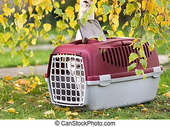 Cat in plastic carrier on grass