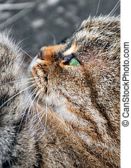 Cat in Profile