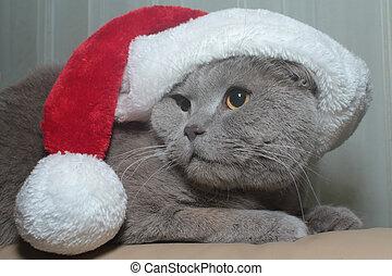 Cat in red cap