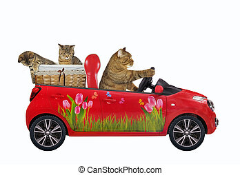 Cat in red car with his kittens