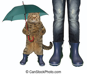 Cat in rubber boots 2