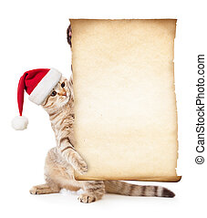 Cat in Santa's hat with old paper roll or parchment