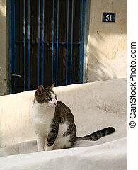 Cat in small greek city