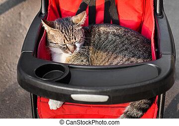 Cat in stroller on a trip