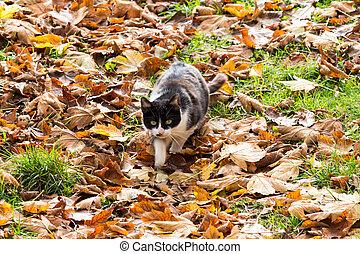 Cat in the autumn foliage.