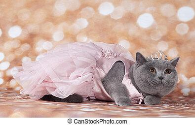 cat in the dancing dress