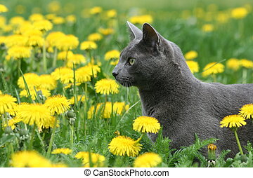 Cat in the Flowers - Cat Hunting through Dandelions