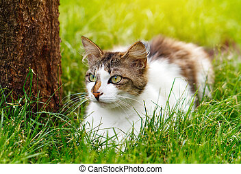 cat in the grass