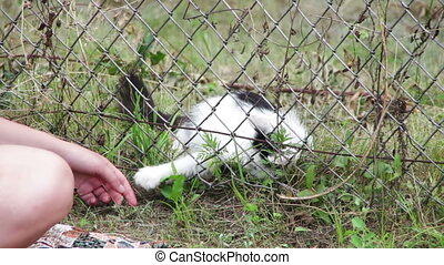 Cat in the Grass Playing with a Person