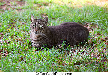 cat in the grass resting