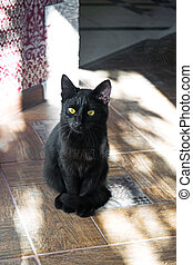 Cat in the house - a black cat sitting on kitchen.