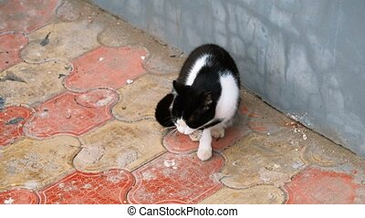 Cat in the street licking its paw with passion. Above Angle...