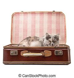 cat in the suitcase