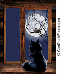 Cat in the window and bird on branch at moonlit