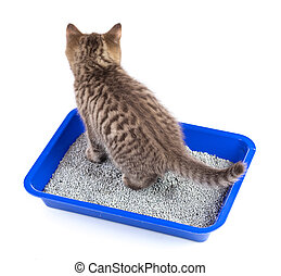 cat in toilet tray box with litter rear view isolated