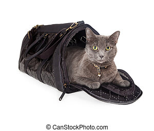 Cat in Travel Carrier - Adult domestic short hair cat laying...
