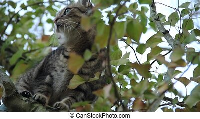 cat in tree - close up of a beautiful domestic cat in a tree