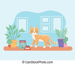 cat in walking room