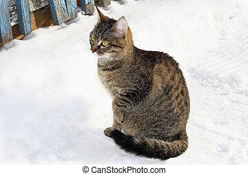 Cat in winter snow.