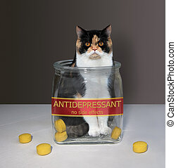 Cat inside glass jar for pills 2