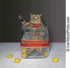 Cat inside glass jar for pills 3