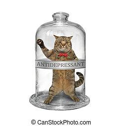 Cat inside medical glass jar 3