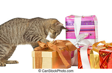 Cat inspecting Christmas presents - Cute playful cat...