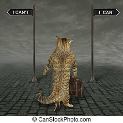 Cat is at a crossroads