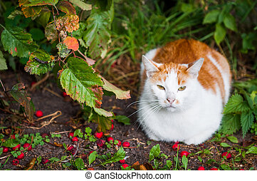Cat is sitting in red berries and autumn leaves foliage